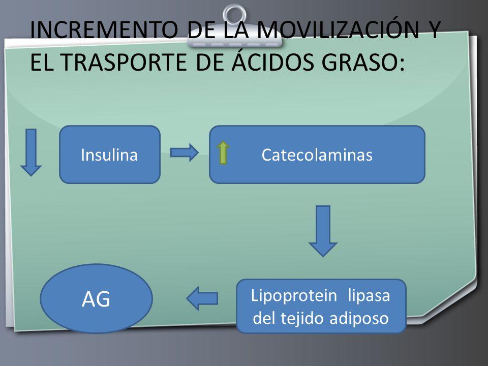 INCREMENTO DE LA MOVILIZACIÓN Y EL TRASPORTE DE ÁCIDOS GRASO: