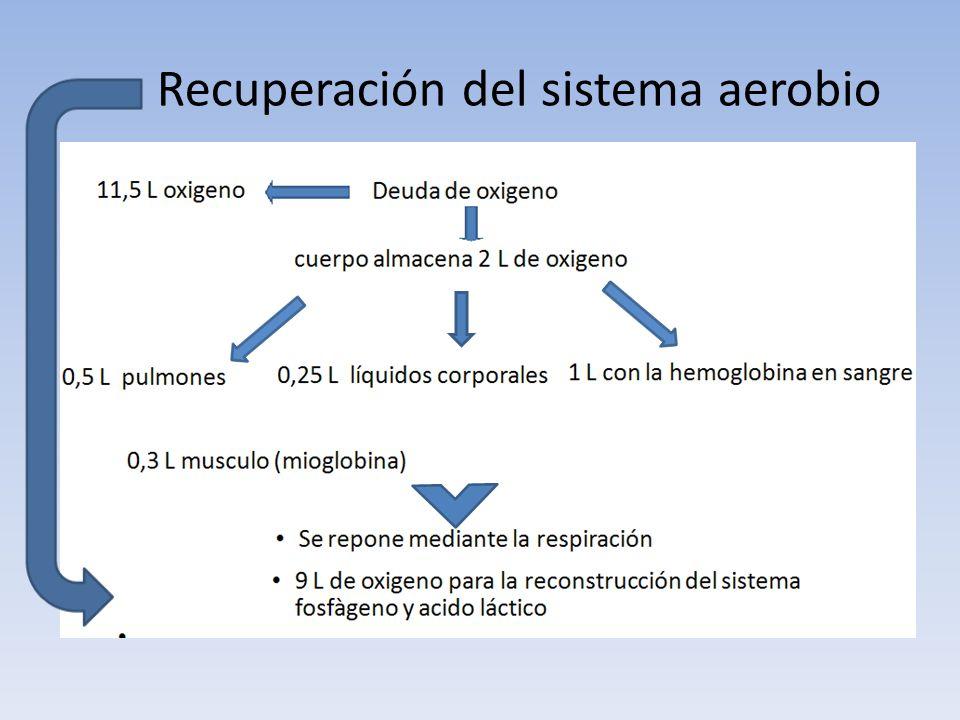 Recuperación del sistema aerobio