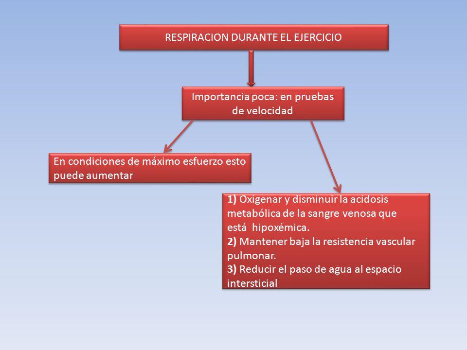 RESPIRACION DURANTE EL EJERCICIO