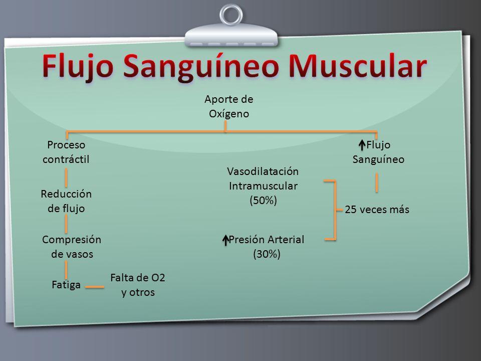 Flujo Sanguíneo Muscular