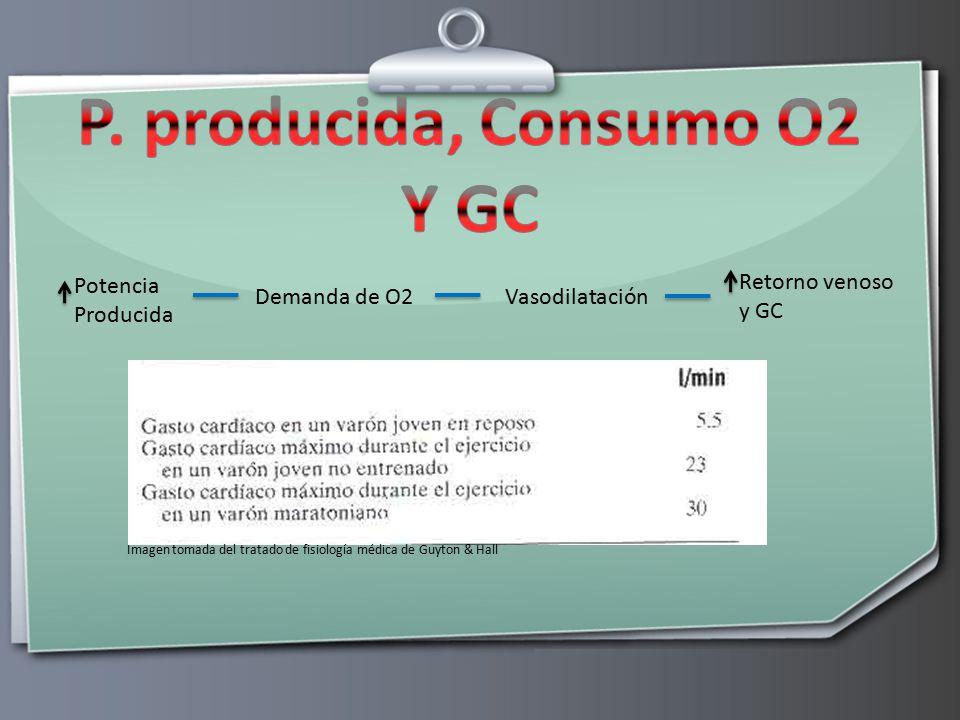 P. producida, Consumo O2 Y GC