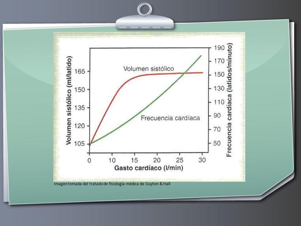 Imagen tomada del tratado de fisiología médica de Guyton & Hall