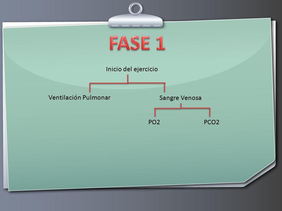 FASE 1 Inicio del ejercicio Ventilación Pulmonar Sangre Venosa PO2