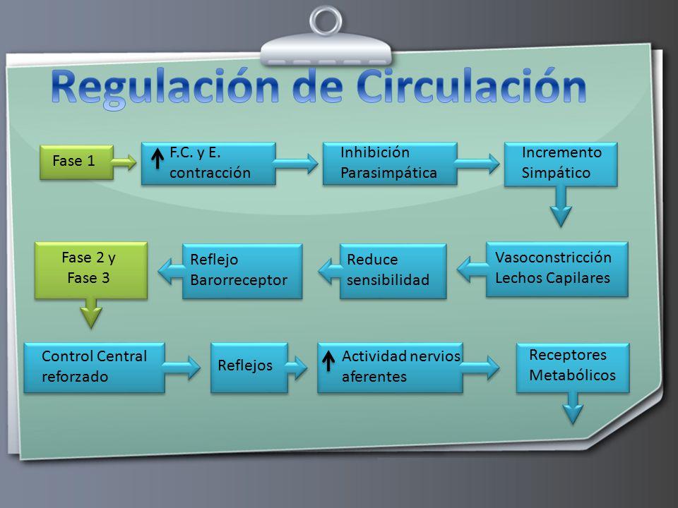 Regulación de Circulación