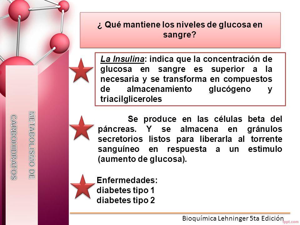 ¿ Qué mantiene los niveles de glucosa en sangre