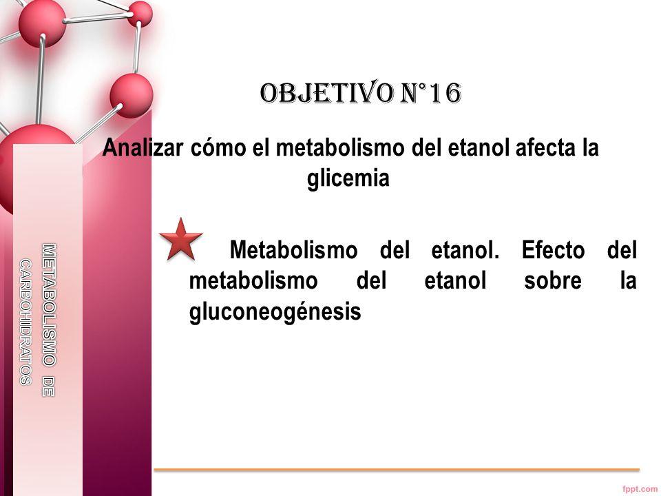 Analizar cómo el metabolismo del etanol afecta la glicemia