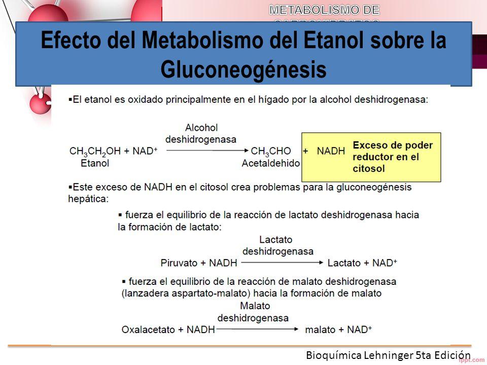 Efecto del Metabolismo del Etanol sobre la Gluconeogénesis