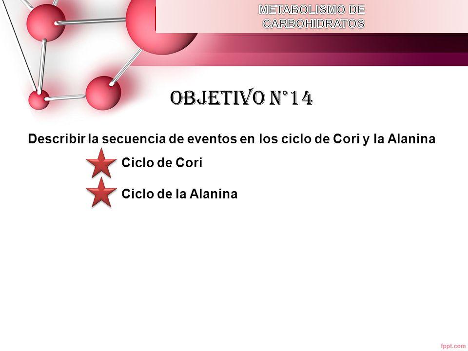 METABOLISMO DE CARBOHIDRATOS. OBJETIVO N°14. Describir la secuencia de eventos en los ciclo de Cori y la Alanina.