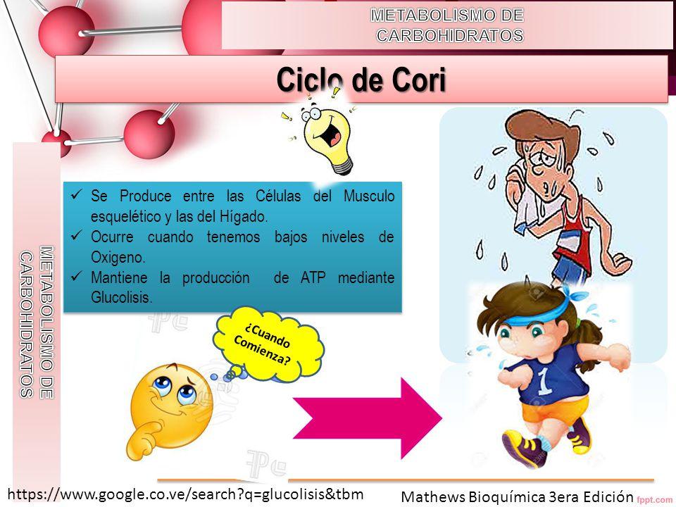 Ciclo de Cori METABOLISMO DE CARBOHIDRATOS