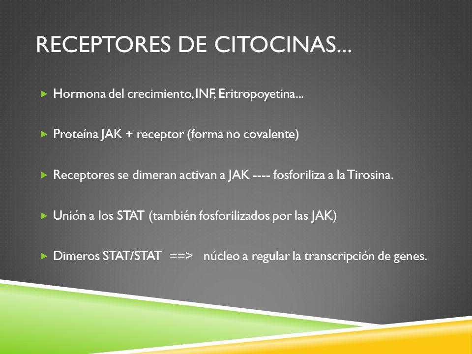 receptores de citocinas...