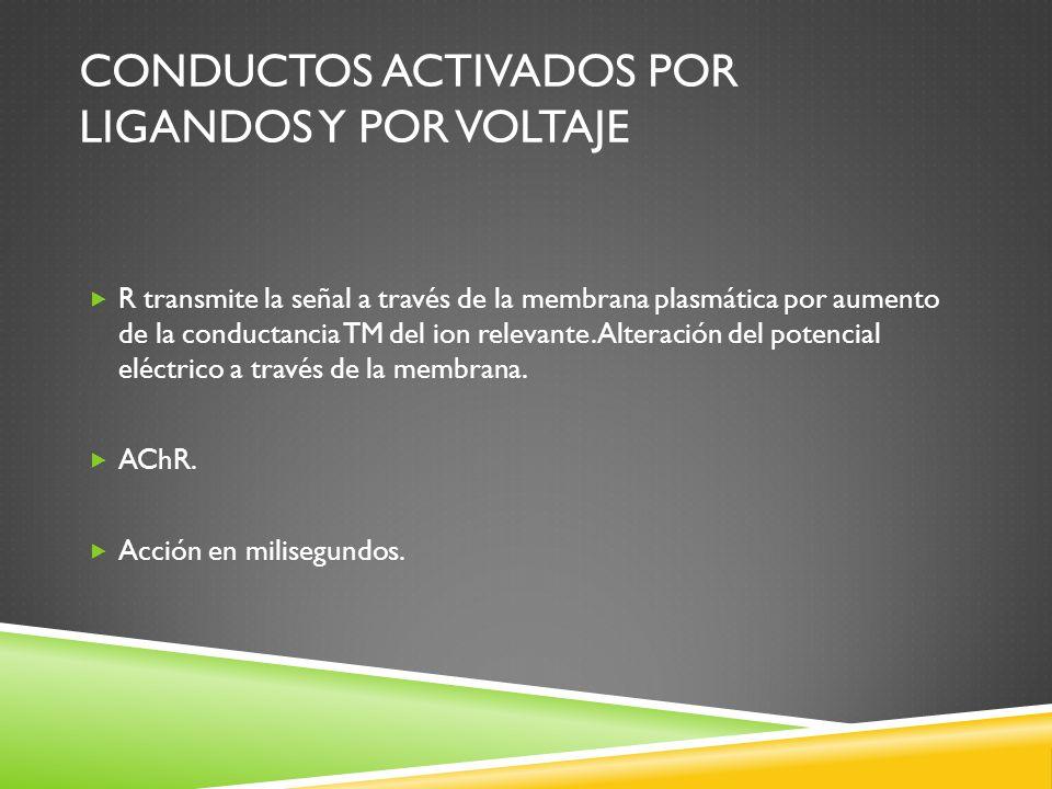 Conductos activados por ligandos y por voltaje