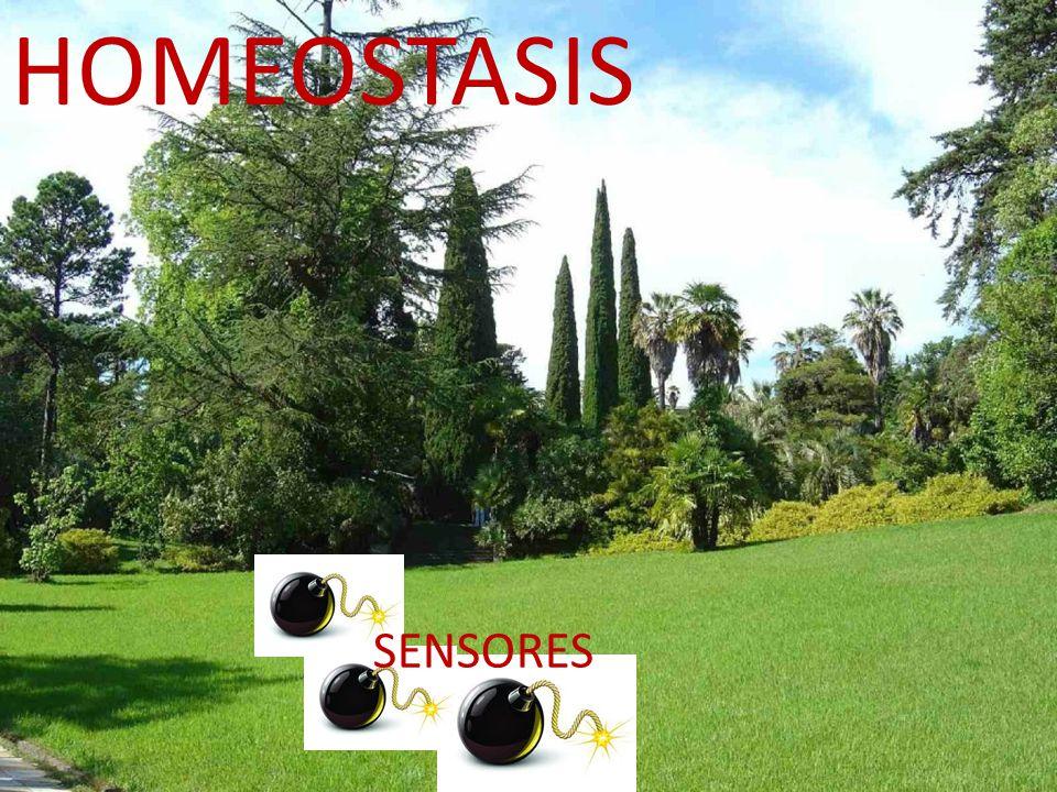 HOMEOSTASIS SENSORES