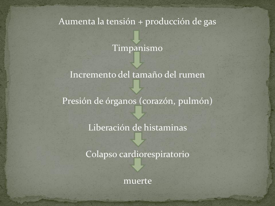 Aumenta la tensión + producción de gas Timpanismo Incremento del tamaño del rumen Presión de órganos (corazón, pulmón) Liberación de histaminas Colapso cardiorespiratorio muerte