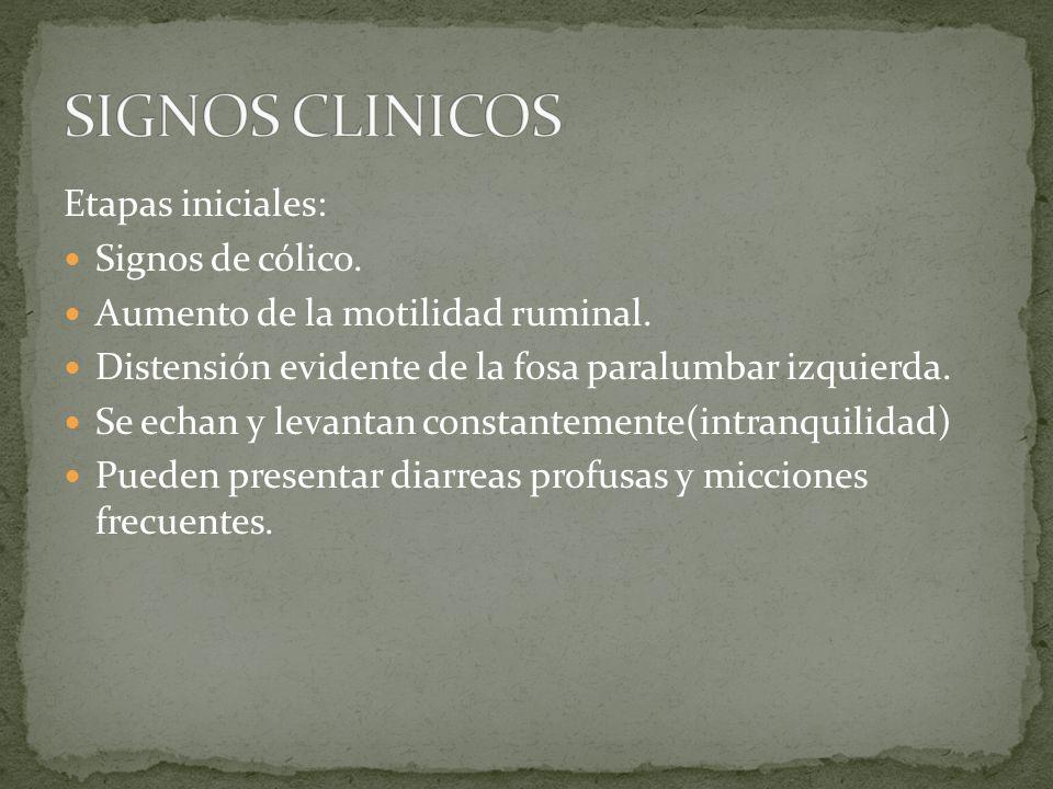 SIGNOS CLINICOS Etapas iniciales: Signos de cólico.