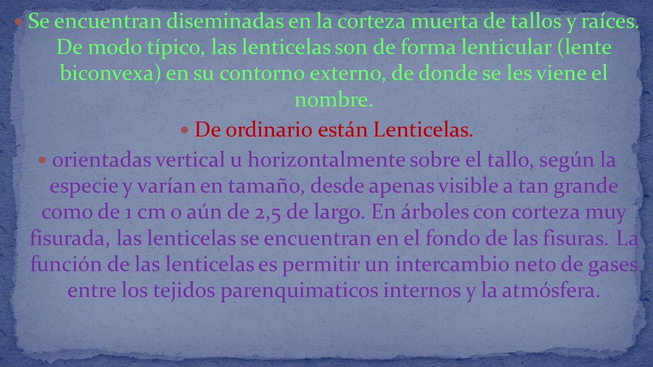 De ordinario están Lenticelas.