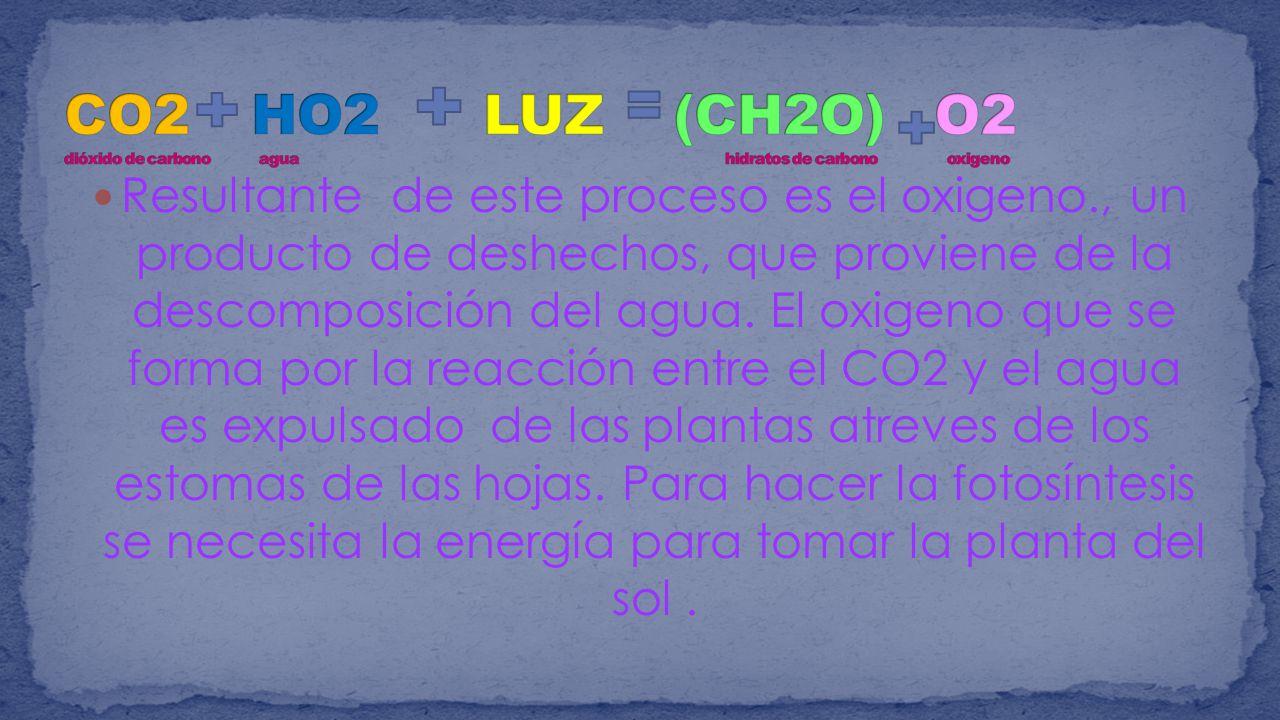 CO2 HO2 LUZ (CH2O) O2 dióxido de carbono agua hidratos de carbono oxigeno