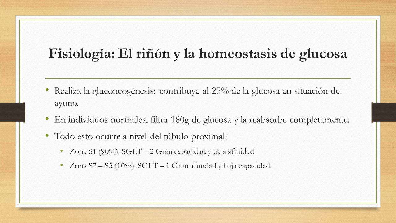 Fisiología: El riñón y la homeostasis de glucosa