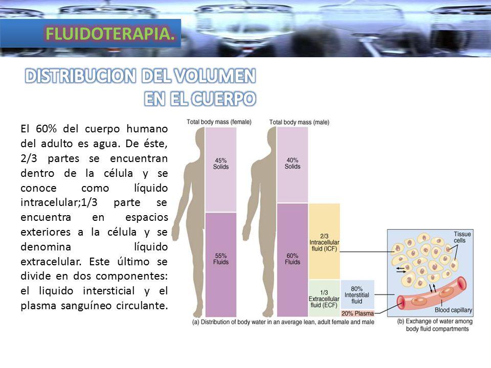 DISTRIBUCION DEL VOLUMEN EN EL CUERPO