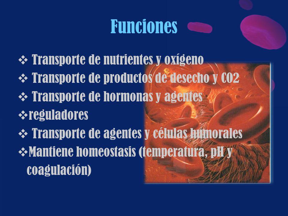 Funciones Transporte de nutrientes y oxígeno