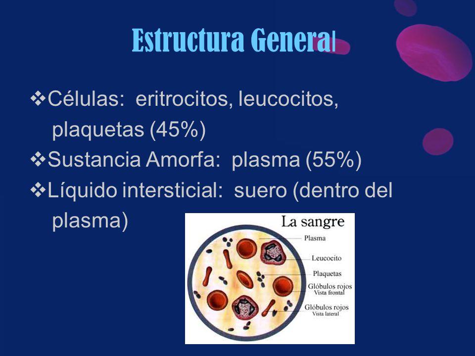 Estructura General Células: eritrocitos, leucocitos, plaquetas (45%)