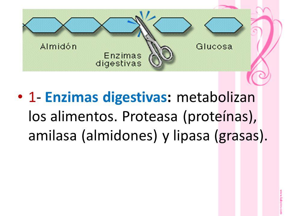 1- Enzimas digestivas: metabolizan los alimentos.