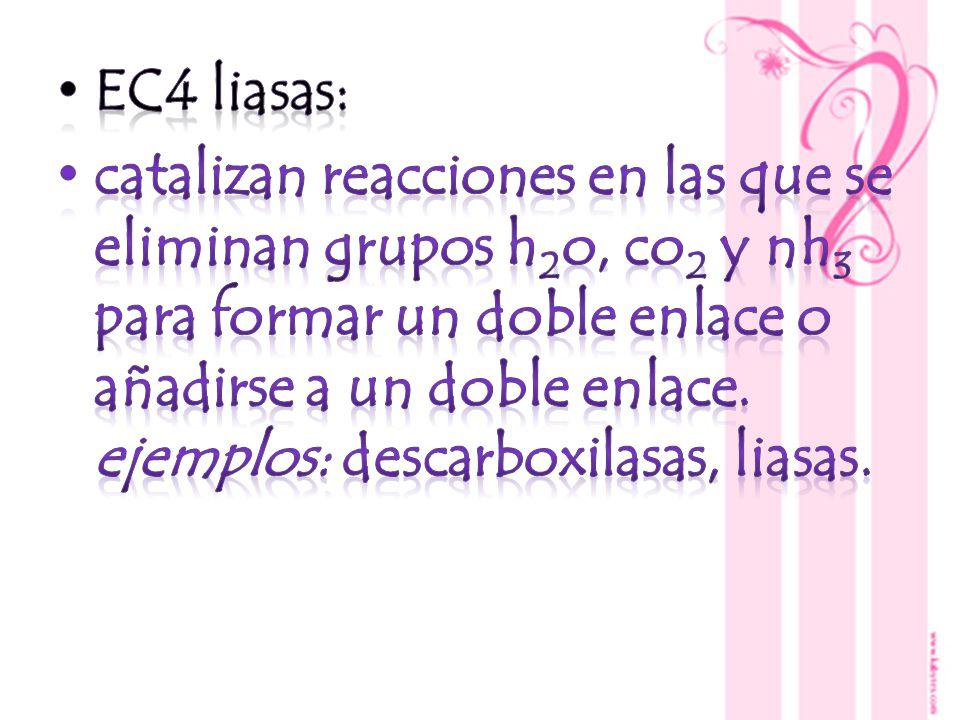 EC4 liasas: