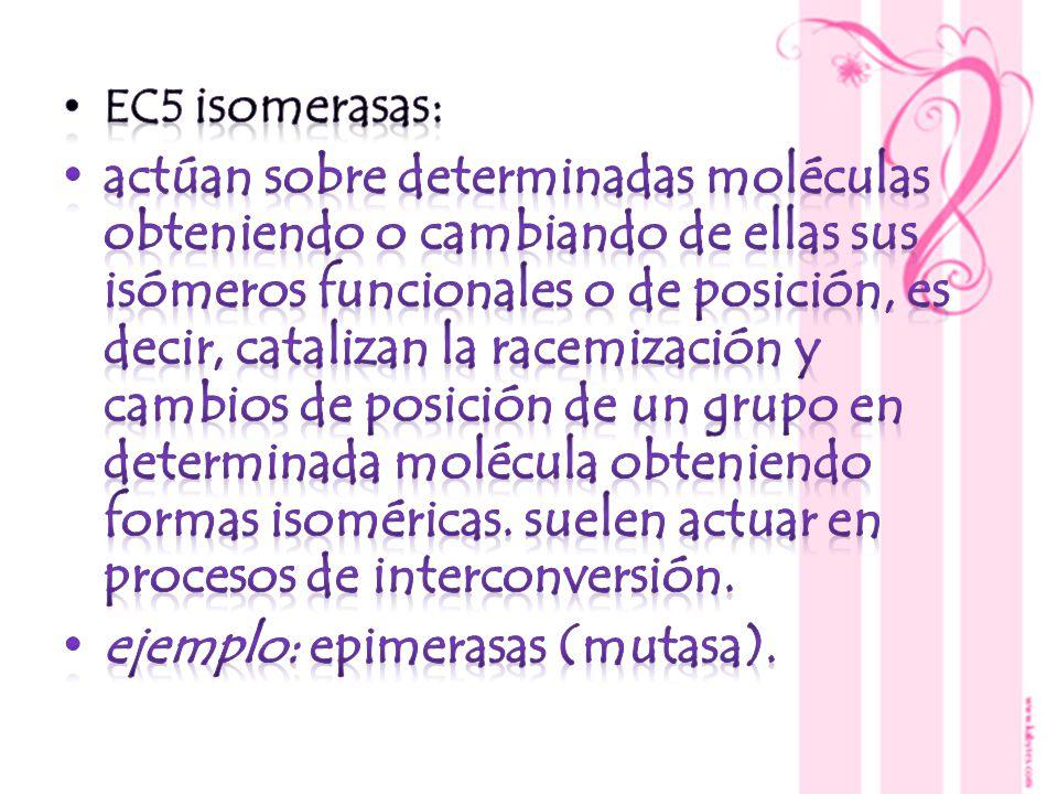 ejemplo: epimerasas (mutasa).