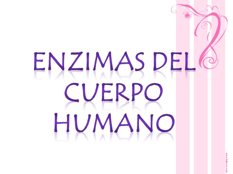 Enzimas del cuerpo humano