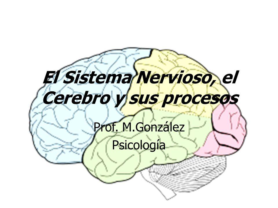 El Sistema Nervioso, el Cerebro y sus procesos