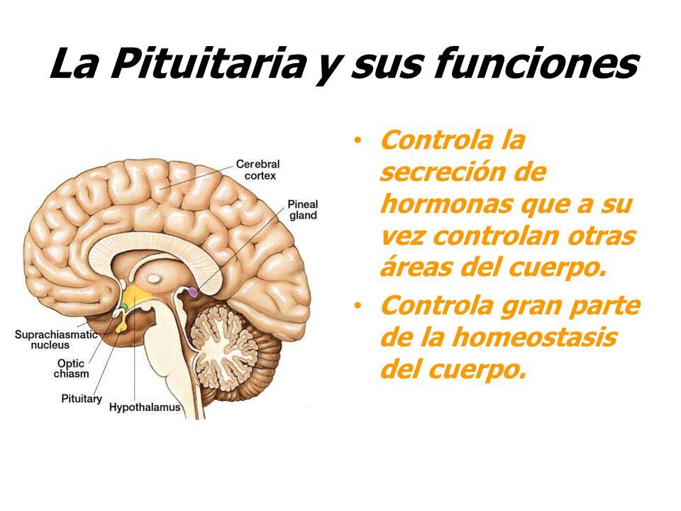 El sistema nervioso el cerebro y sus procesos ppt video for Areas de la cocina y sus funciones