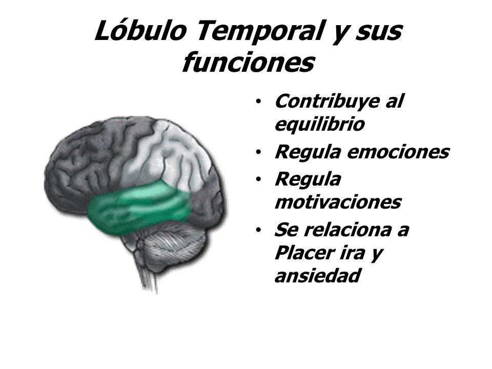 Lóbulo Temporal y sus funciones