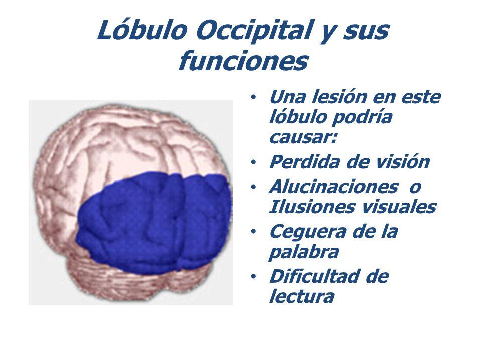 Lóbulo Occipital y sus funciones