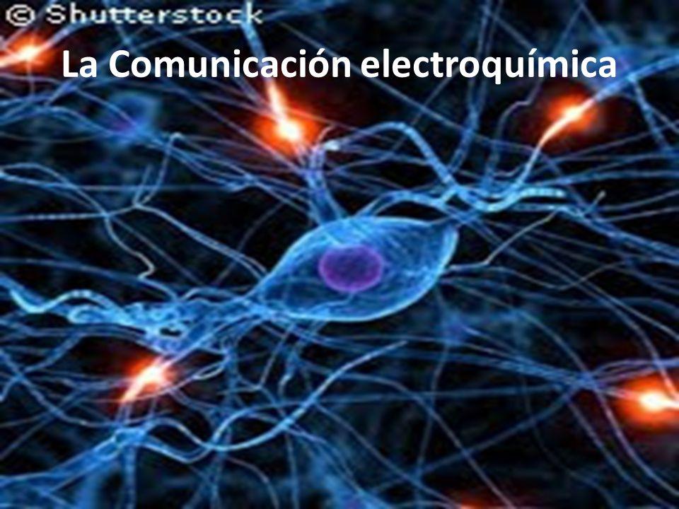 La Comunicación electroquímica