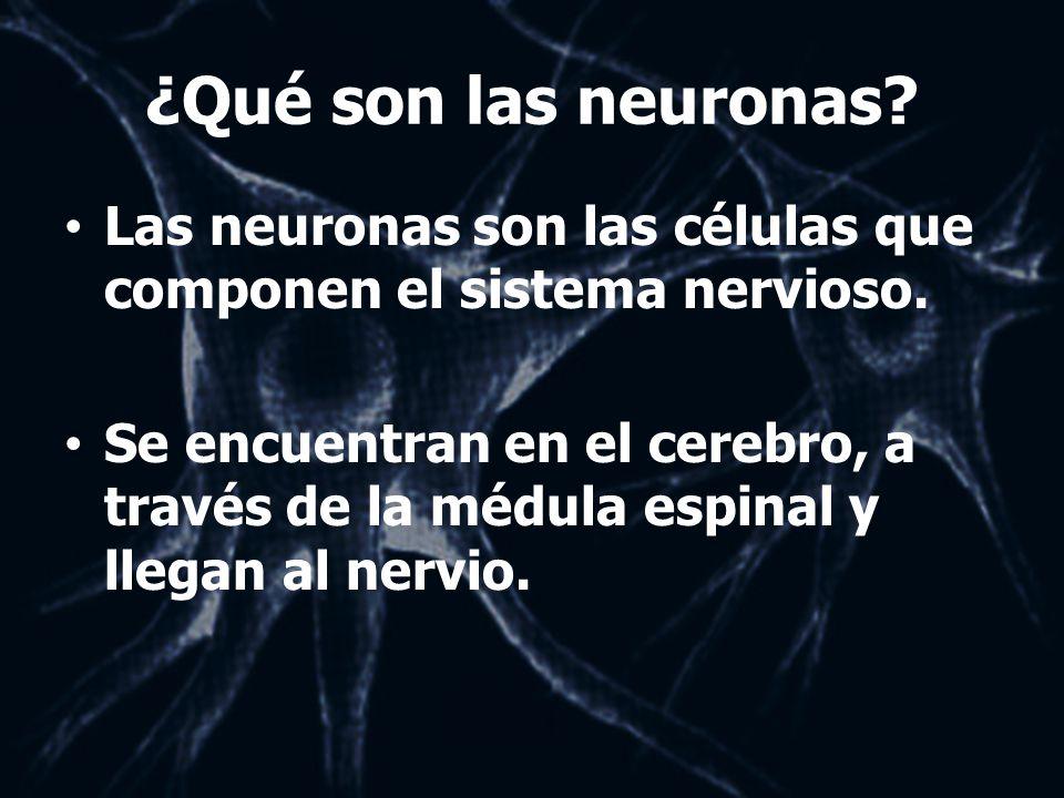 ¿Qué son las neuronas Las neuronas son las células que componen el sistema nervioso.