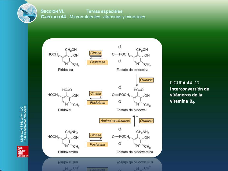 FIGURA 44–12 Interconversión de vitámeros de la vitamina B6.