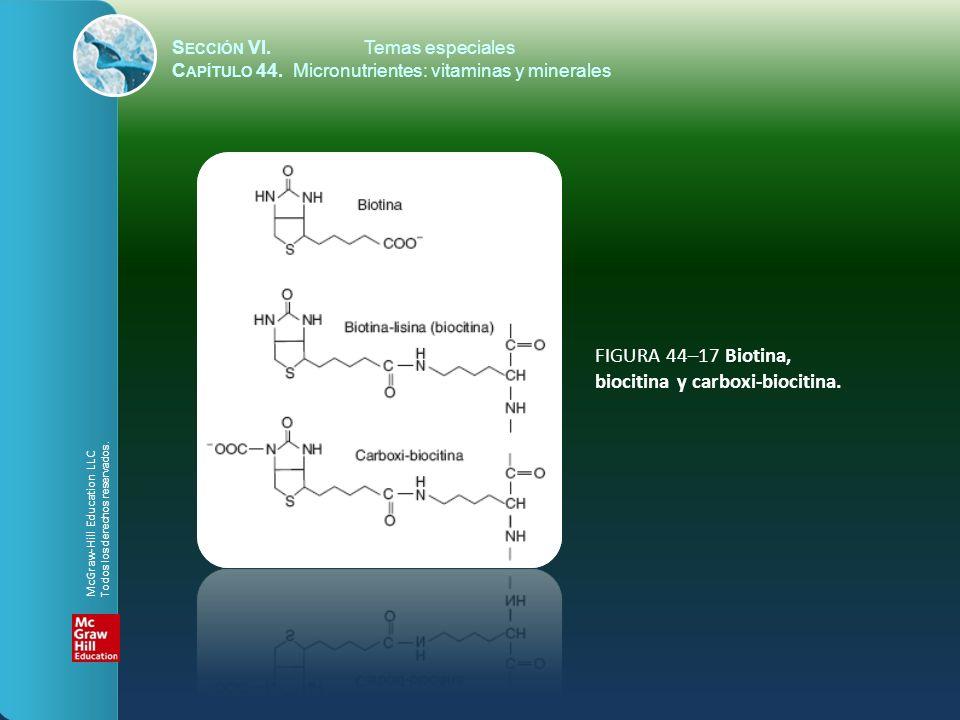 FIGURA 44–17 Biotina, biocitina y carboxi-biocitina.
