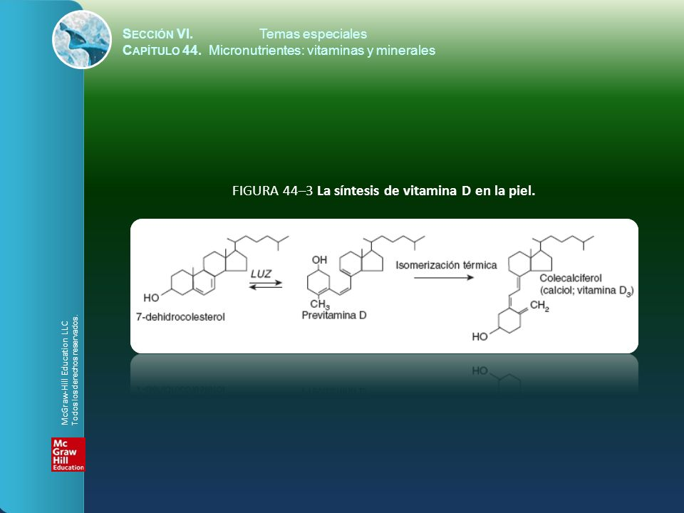 FIGURA 44–3 La síntesis de vitamina D en la piel.