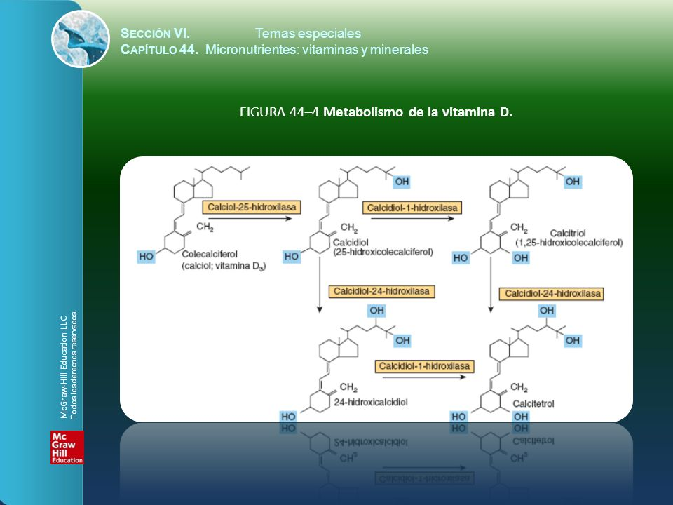 FIGURA 44–4 Metabolismo de la vitamina D.
