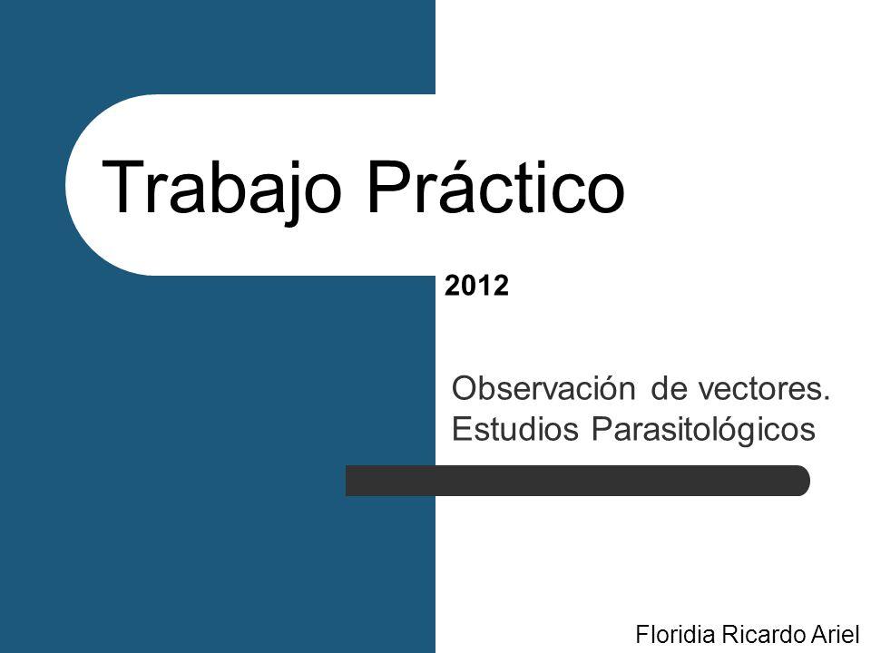 Observación de vectores. Estudios Parasitológicos