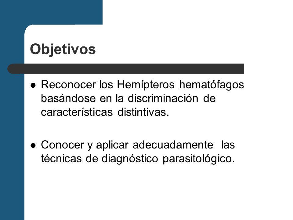 Objetivos Reconocer los Hemípteros hematófagos basándose en la discriminación de características distintivas.