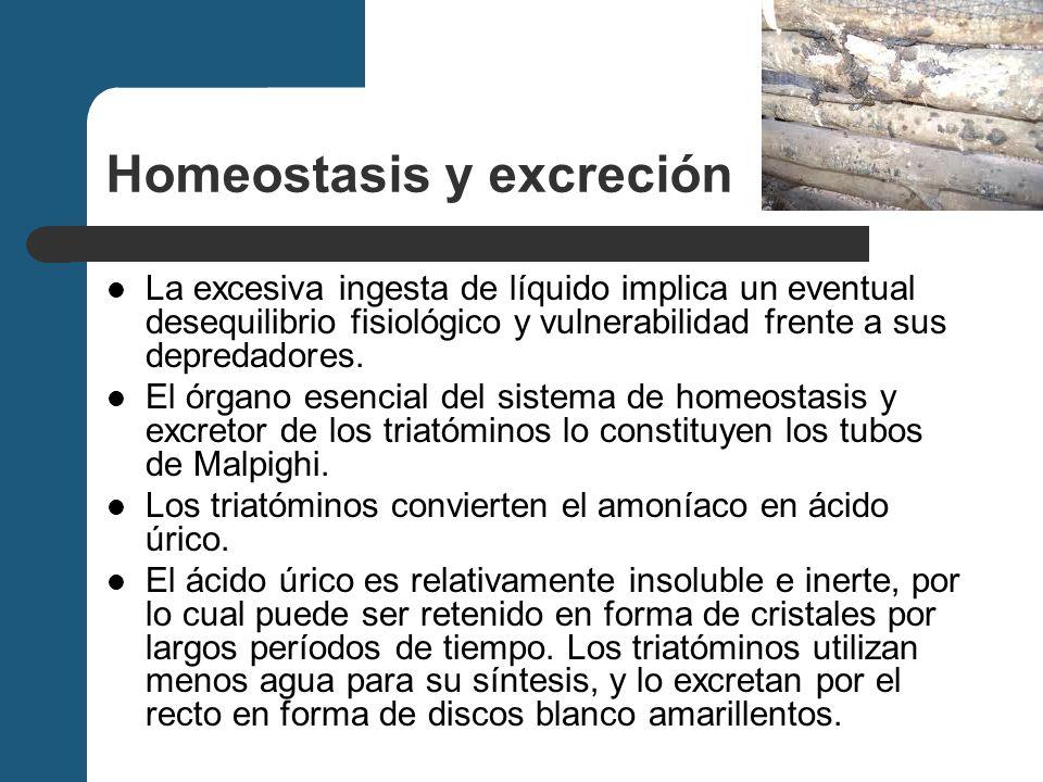 Homeostasis y excreción