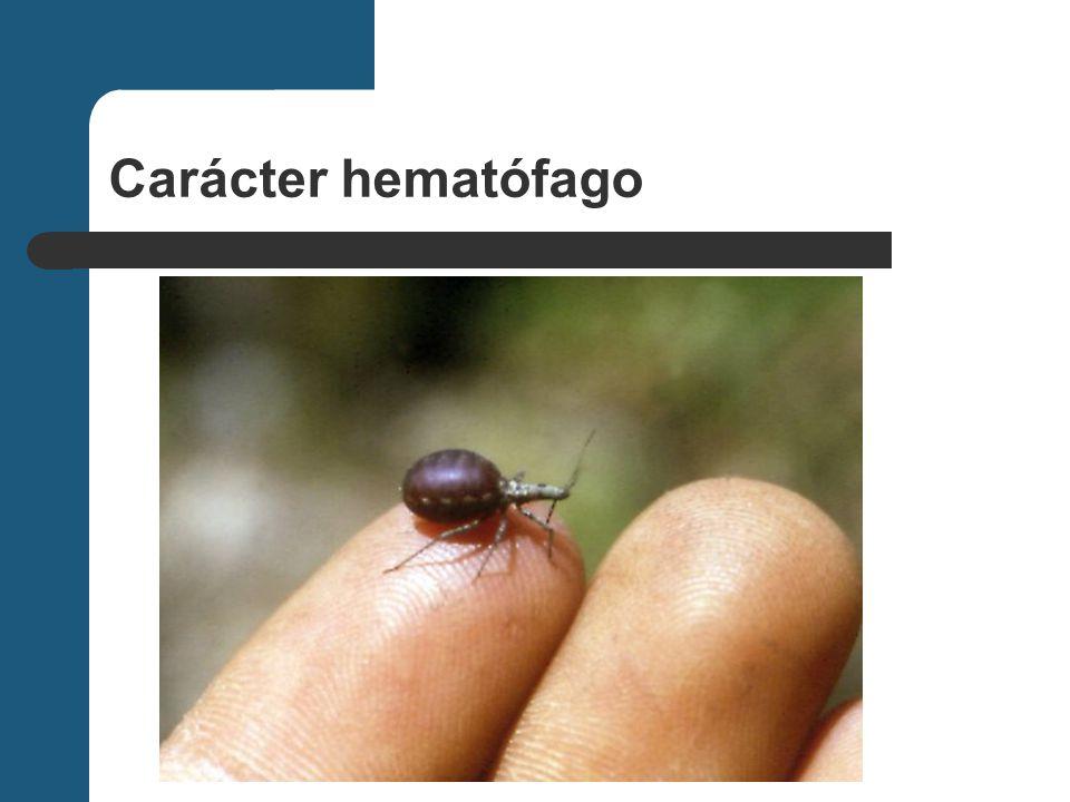 Carácter hematófago