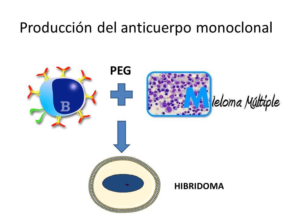Producción del anticuerpo monoclonal