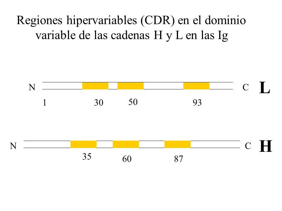 L H Regiones hipervariables (CDR) en el dominio