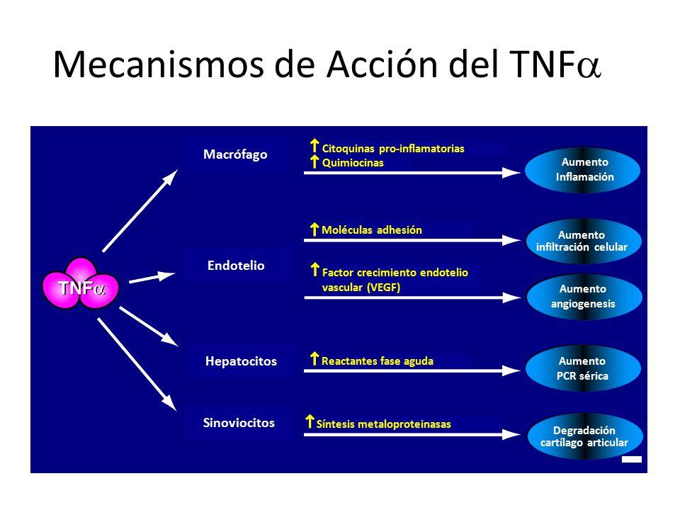 Mecanismos de Acción del TNFa
