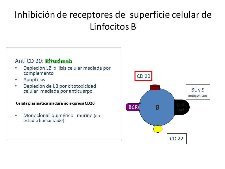 Inhibición de receptores de superficie celular de Linfocitos B