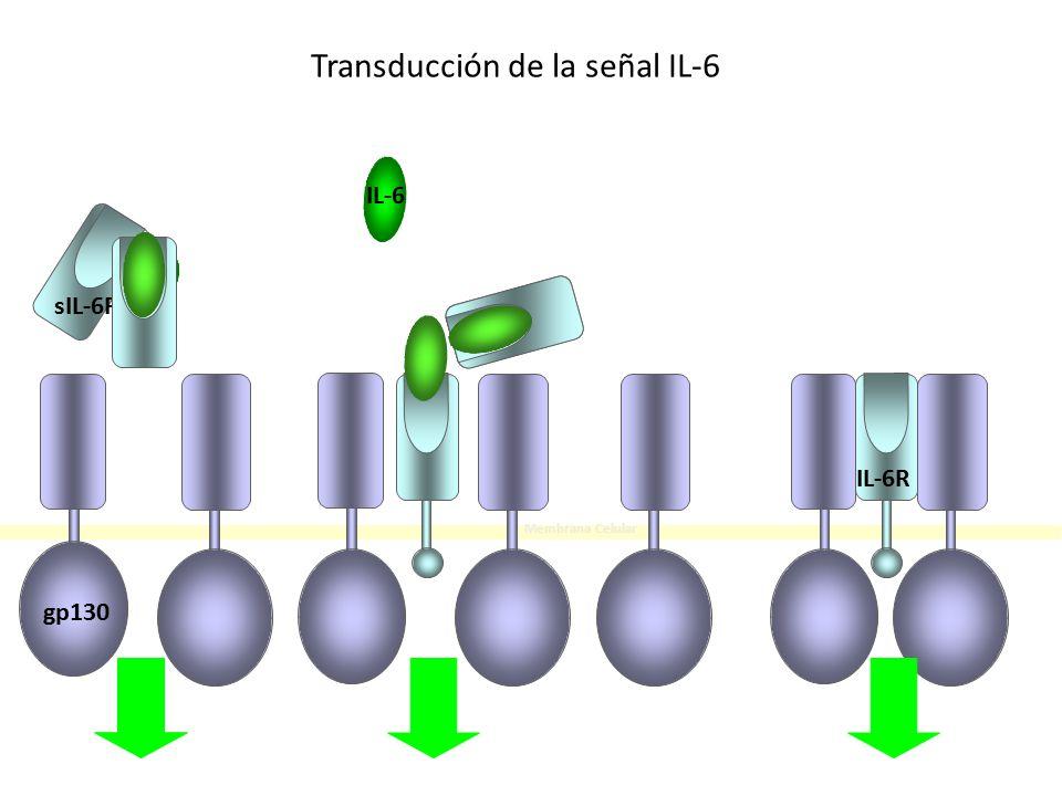 Transducción de la señal IL-6