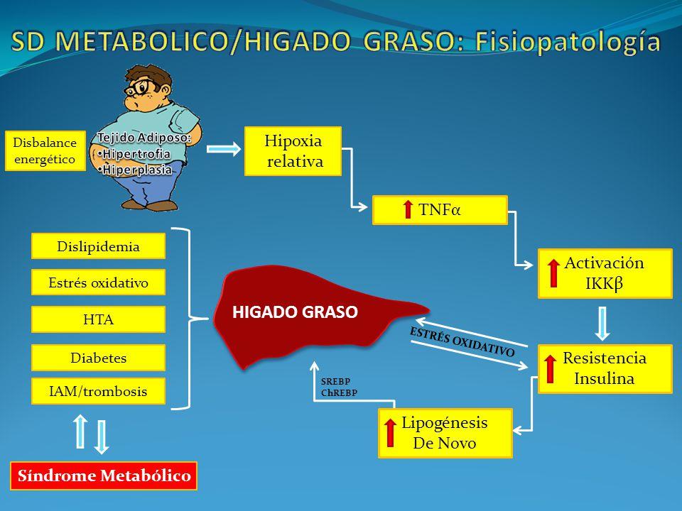 SD METABOLICO/HIGADO GRASO: Fisiopatología