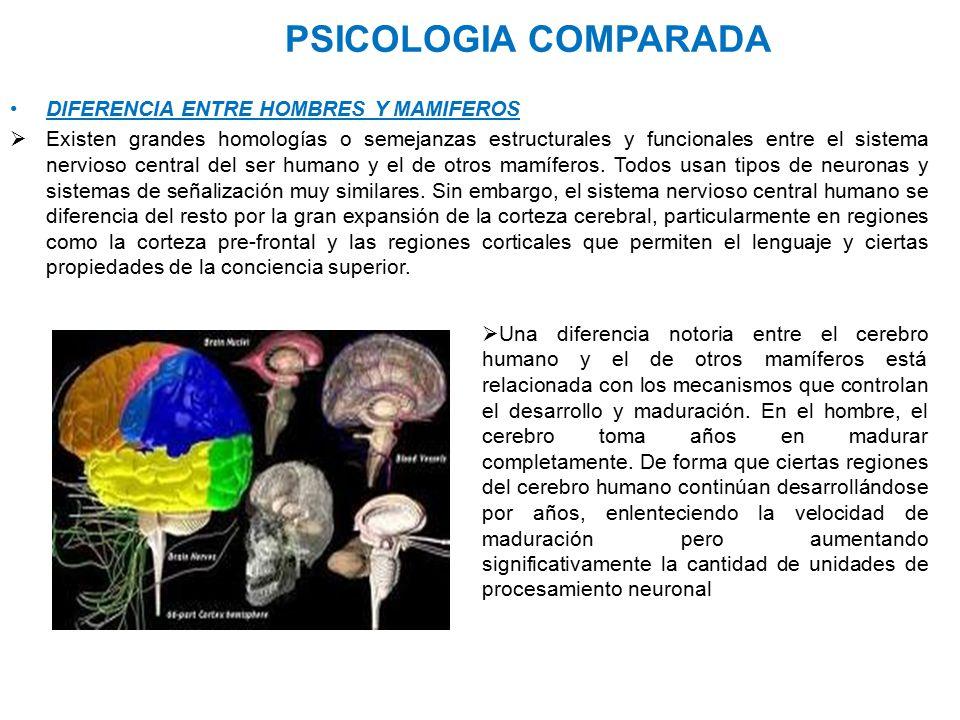 PSICOLOGIA COMPARADA DIFERENCIA ENTRE HOMBRES Y MAMIFEROS