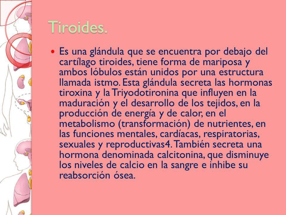 Tiroides.